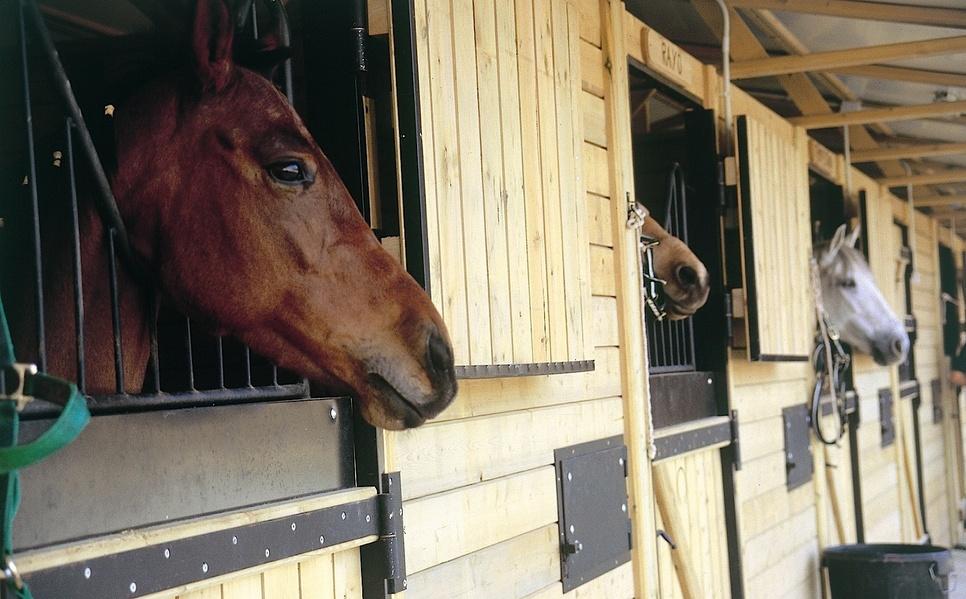 marbella_club_golf_resort_riding_stables